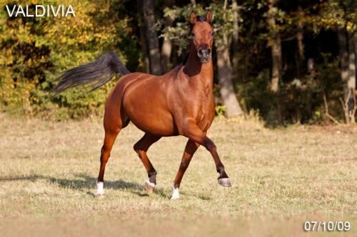 http://horse-lc.ucoz.ru/_ph/59/2/243961098.jpg